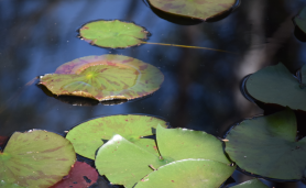 screen-shot-2017-02-03-at-5-41-11-pm