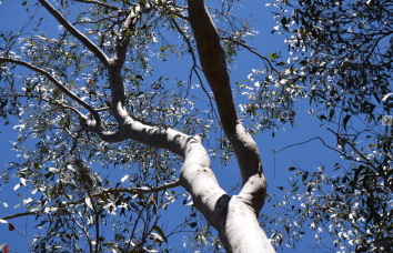 screen-shot-2017-02-03-at-5-42-10-pm