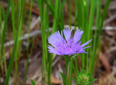 screen-shot-2017-02-04-at-11-10-02-pm