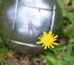 screen-shot-2017-02-04-at-11-10-17-pm