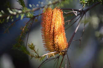 screen-shot-2017-02-04-at-5-39-45-pm