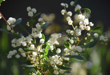 screen-shot-2017-02-04-at-5-40-29-pm