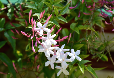 screen-shot-2017-02-04-at-5-41-53-pm