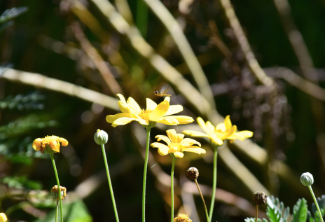 screen-shot-2017-02-04-at-5-42-02-pm