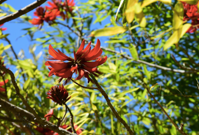 screen-shot-2017-02-04-at-5-42-42-pm