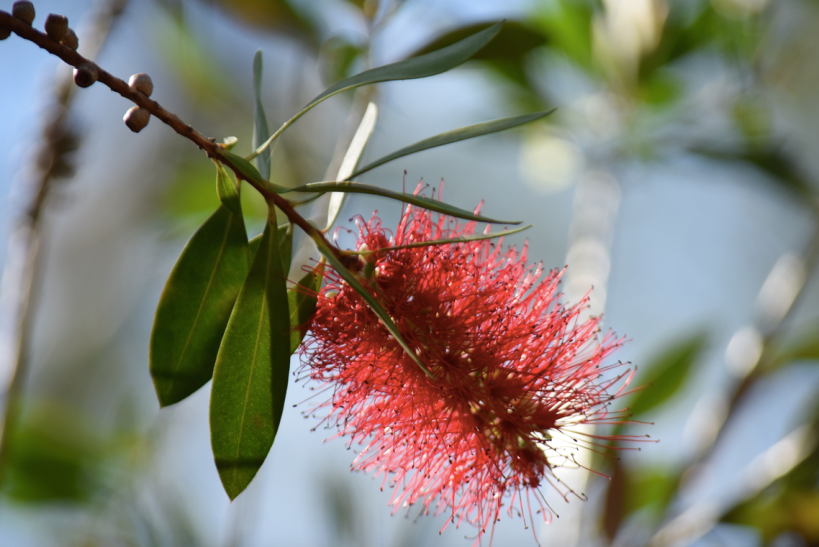 screen-shot-2017-02-04-at-5-44-53-pm