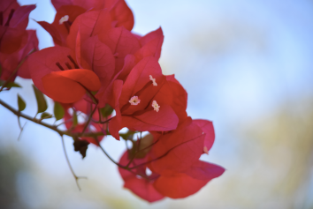 screen-shot-2017-02-04-at-5-45-32-pm