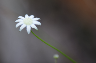screen-shot-2017-02-04-at-6-02-15-pm