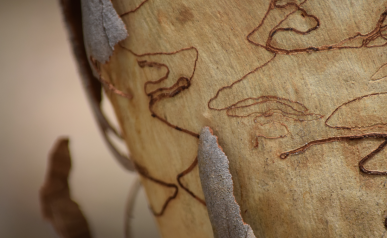 screen-shot-2017-02-04-at-6-04-54-pm