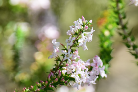 screen-shot-2017-02-04-at-6-05-28-pm
