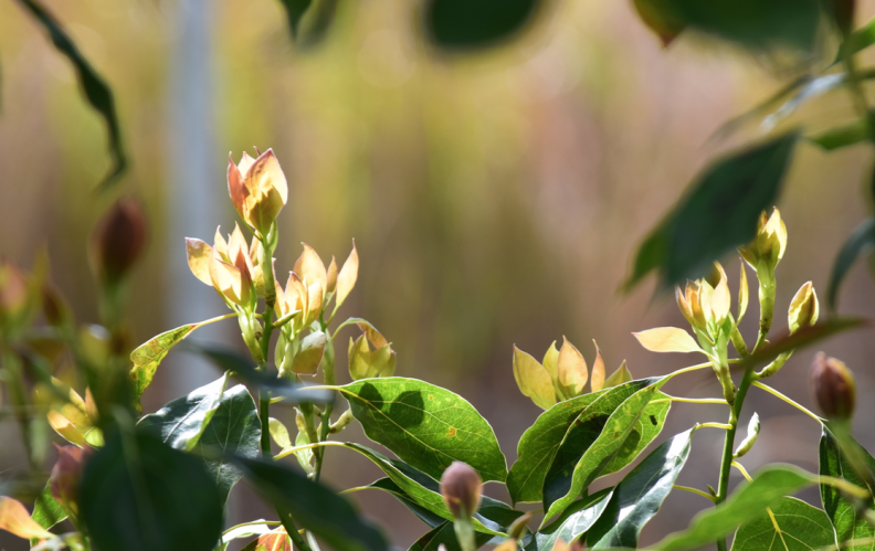 screen-shot-2017-02-04-at-6-06-19-pm