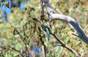 screen-shot-2017-02-04-at-6-08-08-pm
