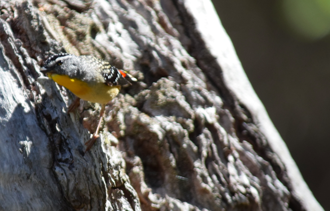 screen-shot-2017-02-04-at-6-08-32-pm