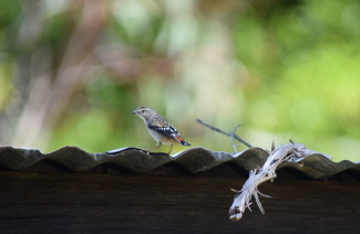 screen-shot-2017-02-04-at-6-09-36-pm