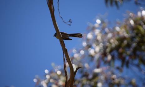 screen-shot-2017-02-04-at-6-20-08-pm