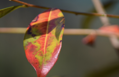 screen-shot-2017-02-04-at-6-20-34-pm
