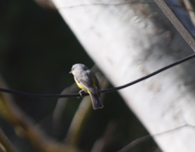 screen-shot-2017-02-04-at-6-21-49-pm
