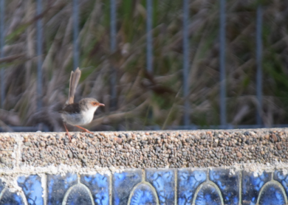 screen-shot-2017-02-04-at-6-22-01-pm
