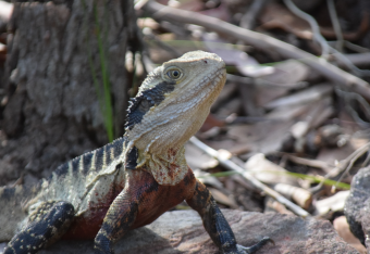 screen-shot-2017-02-04-at-6-23-16-pm