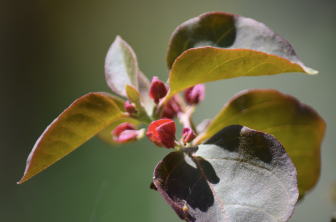 screen-shot-2017-02-04-at-6-23-53-pm