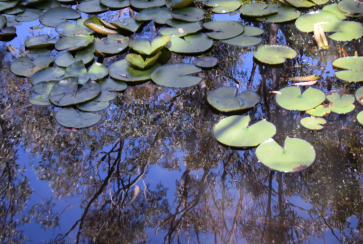 screen-shot-2017-02-04-at-6-24-29-pm