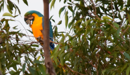 Screen Shot 2018-07-29 at 5.52.13 pm