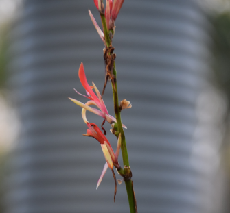 Screen Shot 2018-07-29 at 5.53.15 pm