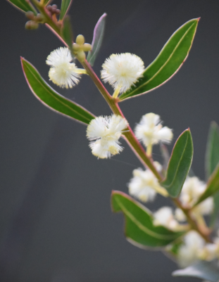 Screen Shot 2018-07-29 at 5.53.30 pm