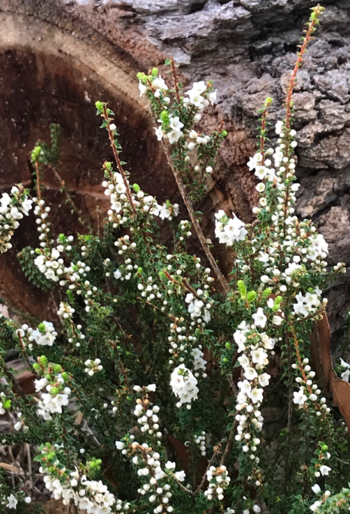 Screen Shot 2018-09-15 at 1.48.24 pm